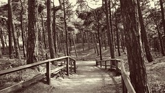 Formby National Trust (JamieHaugh) Tags: trees sepia liverpool fence landscape outdoors woods squirrels outdoor path formby pinewoods freshfield