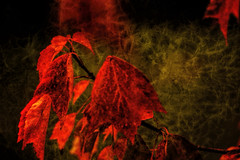 red mist (grumpy114) Tags: westonbirt
