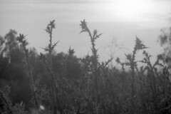 (vlΛиco iиvierиo) Tags: plants plantas natural grow herb