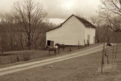 Horses, Barn (Sarah Hina) Tags: road ohio horses sepia barn rural farm country