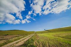 (c) Wolfgang Pfleger-0655 (wolfgangp_vienna) Tags: schweden sweden sverige schonen southsweden kseberga ystad sandhammaren blue sky blau himmel felder