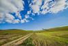 (c) Wolfgang Pfleger-0655 (wolfgangp_vienna) Tags: schweden sweden sverige schonen southsweden kåseberga ystad sandhammaren blue sky blau himmel felder