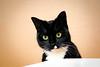 My sweetheart (katjacarmel) Tags: black white kat cats animals dier gato