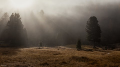 Incidence Of Light (fotoRschaffer) Tags: europe grisons switzerland autumn fog forest landscape mist nature trees sunlight sunbeams engadine incidenceoflight stazerwald