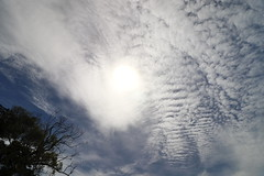 sunthroughclouds (Daniel Menzies) Tags: clouds sky trees atmosphere canon80d canon1018mmf4556 polarizer sun star light