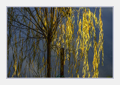 - DSC_1050-2 (Ferruccio Jochler) Tags: vegetation tree reflect forest foliage mirror nature narcissism