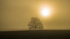 mighty misty oak (HHH Honey) Tags: sigma1735mmlens a7rii sonya7rii trees wiltshire landscape mist fog bedwyn wilton oak