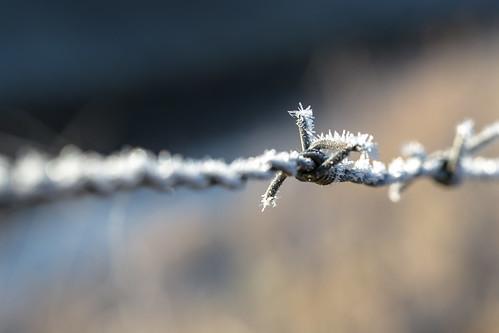 Frosty...