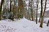 Sous-bois enneigé (Diegojack) Tags: paysages froid cossonay vaud suisse neige glace hiver chemin étang sépey