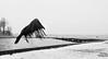 (Kijkdan) Tags: crow heemtuin kralingen kralingsebos rotterdam birds fuji xpro2 16f14 16mm