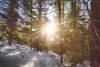 Promise of a new day (johnwporter) Tags: hiking scramble snowshoe cascades mountains nationalforest mtbakersnoqualmienationalforest granitemountain pnw upperleftusa northwestisbest 徒步 爬行 雪鞋行 喀斯喀特山脈 山 國家森林 貝克山史諾夸米國家森林 花崗岩山 太平洋西北部 美國左上角 西北部最好 alpinelakes wilderness alpinelakeswilderness 高山湖泊 荒野 高山湖泊荒野區 atx116prodx tokinaaf1116mmf28 wideangle wideanglelens 廣角 廣角鏡