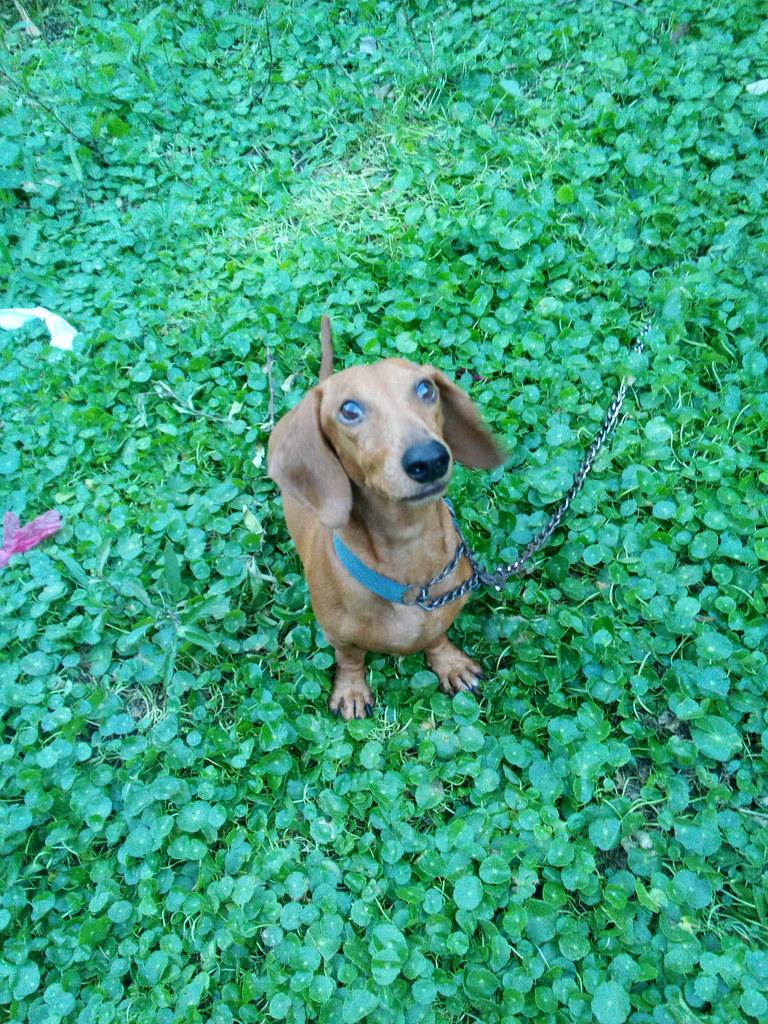Wiener Dog Streaming Free