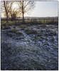 Sutton Park (Scphoto_uk) Tags: 1125 2014 90mm fujisuperia400 fujifilm ga546zi park scan f16 newyearsday sutton