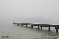 Foggy winterland