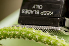 Let's peel cactus! (Mario Donati) Tags: itsapeelingtome macromondays nikon d3100 sigma70300mm