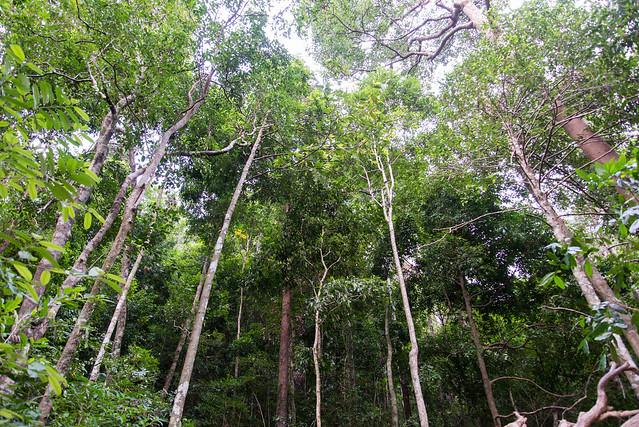 Trees large image