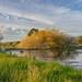 Edgewater Seasonal Wetland