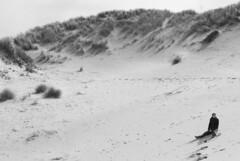 Alone In The Desert (Sylvain Sylvain) Tags: bw france blanco branco canon 350d negro preto nb weis bianco nero schwarz nord sylvainsylvain 黑白色 sylvainclep 백색 m3l0dym4k3r 黒い白 까만