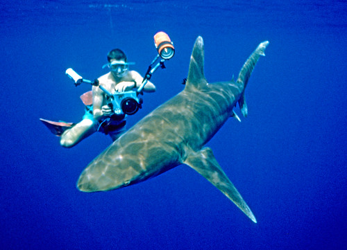 Oceanic White Tip with Brandon