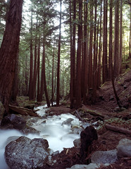 A magical stream, Lime Kiln State Park (artandscience) Tags: california forest bigsur timeexposure redwoods crowngraphicspecial limekilnstatepark