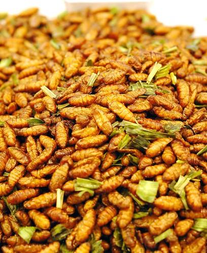 larvae to eat