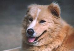 named Hachi
