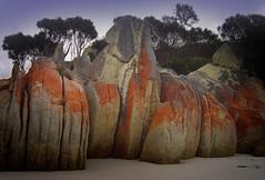 All in a row (katepedley) Tags: red beach rock sand sony australia granite tasmania lichen geology bayoffires dscp92 sthelen binalongbay