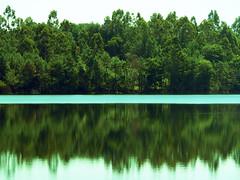 embalse de Cecebre, en A Corua (briveira) Tags: lake tree lago rboles reflejo estanque reflexion embalse vegetacin cecebre briveiracom