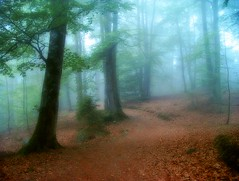 misty forest (movitz) Tags: morning trees summer mist fog forest cards photography skne sweden steve anderson skog bok 4am beech bjrnum fcpat steveandersonse 4amproject wwwsteveandersonse httpblogsteveandersonse