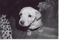 Baby Sid (Love Your Roots) Tags: cute puppy sidney