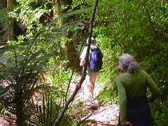Sudarshanaloka bush walk 1