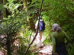 Sudarshanaloka bush walk 1