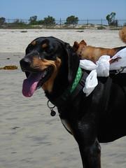 DSCN0003.JPG (erika_afeman) Tags: dogs wyman