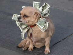 dog with dollars