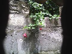florenmuro08 (MichaelRogelio) Tags: michael fotos vazquez