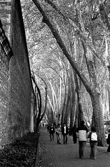 (Kema Keur) Tags: city trees bw wall 35mm walk pedestrian istanbul 135 beikta dolmabahe 2890 canon3000v kemakeur