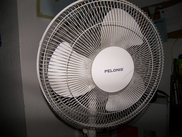 Portrait of Fan