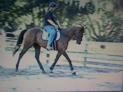 Rocky and me. (kamelotsbigfan) Tags: horse 6 tag3 taggedout bay tag2 tag1 florida rocky th gelding