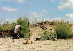 Anche lui ha diritto alla sua giornata al mare... (sangiopanza2000) Tags: vacation italy dog holiday beach bicycle cane italia dunes dune salento puglia spiaggia vacanza italians bicicletta sangiopanza fotoincatenate