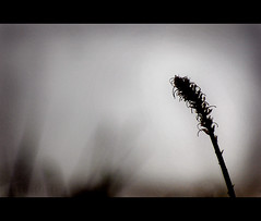 (Grace_L) Tags: autumn winter flower digital dark israel nikon solitude alone d70s lonely withered endofsummer