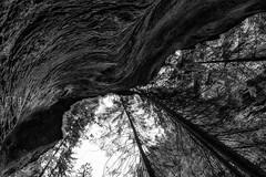 Upside Down (Thdenz) Tags: viamala landscape schlucht schweiz landschaft