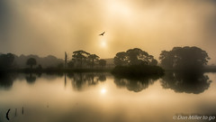 Foggy Rookery (DonMiller_ToGo) Tags: foggy venicerookery hdrphotography nature reflection goldenhour lake florida hdr silhouettes 3xp bif outdoors fog rookery d810 sky sunrise