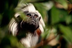Monkey Boy - by ArdailSmith