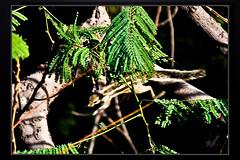 Birds_Animal (5) (My Pixel Magic) Tags: animal canon squirrel canon500d canonlens animalaction treeanimal animalinaction indiananimal indiansquirrel squirrelinaction animalofindia actionofanimal canondslr500d canonn55250mmlens squirrelofindia squirrelonthetree