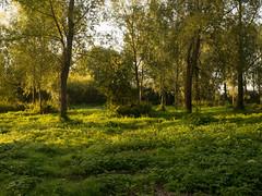 20150822-GR009710-Edit (fleetingphotons) Tags: trees river fishing ricohgr kennet wasingestate warrenbeat midghamberkshire