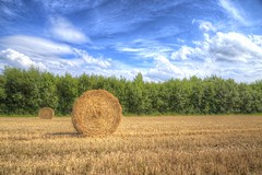 Farmland Summer