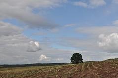 harvest time (Uli He - Fotofee) Tags: nikon wasser herbst himmel mais uli baum ulrike rhn ernte wanderung wasserkuppe himmlisch pftze herbstlich hergert herbstlicht stellberg erntezeit nikond90 fotofee ulrikehe ulrikehergert ulihe