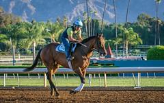 DSC_4163 (rskim119) Tags: park santa morning horse motion animal racetrack corner sunrise dawn nikon track outdoor jockey anita workout tamron panning 70300 clockers d3300