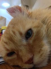 Nap Time! (sjrankin) Tags: animal northerncalifornia closeup cat edited hdr califronia nobuo 18july2015