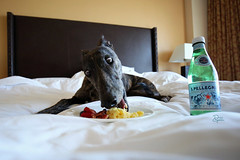 38/52 Breakfast in Bed (d.rizzle) Tags: california vacation greyhound tahoe ritzcarlton breakfastinbed 52weeksfordogs dolcegambino